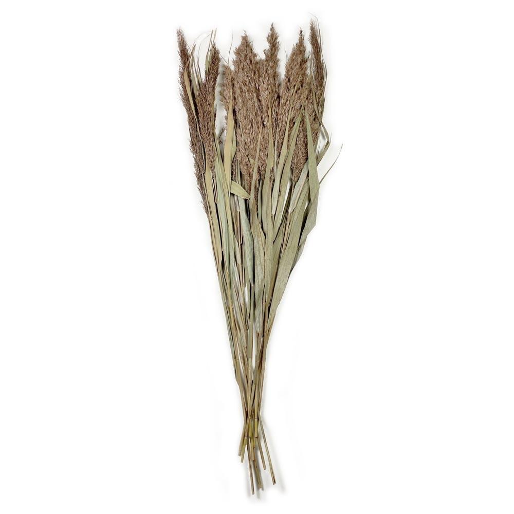 Schilfrohr 10 Stk. natur
